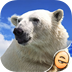 Jigsaw Wonder Polar Bear Puzzles for Kids